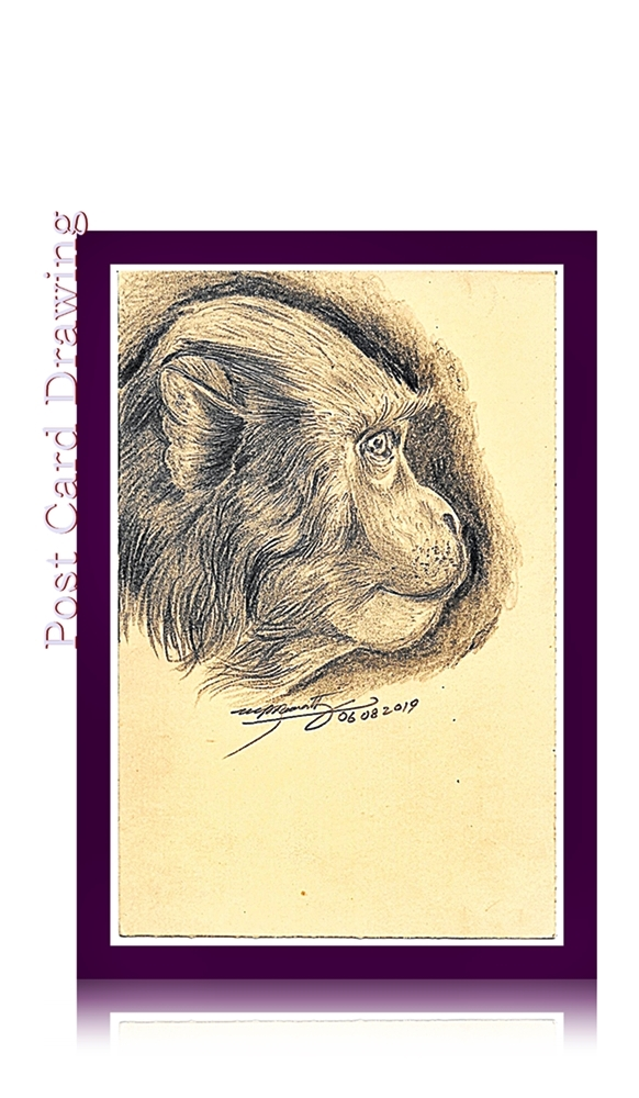 Fountain Pen Art Drawing - Bunder - Monkey